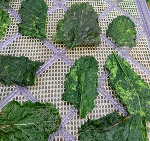 Beyond kale chips: Dehydrated chips from any tender green