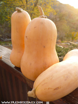 Choosing Butternut Squash Tip at FreshBitesDaily.com