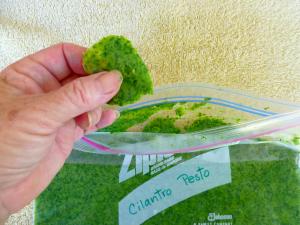 Cilantro Pesto at FreshBitesDaily.com