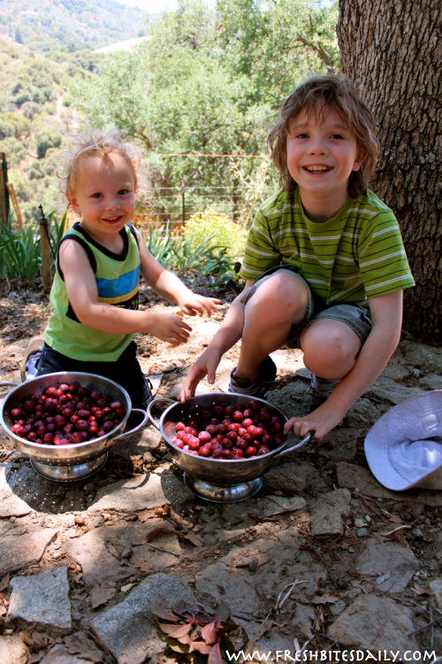Wild Plum Harvest at FreshBitesDaily.com
