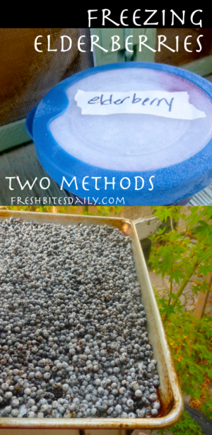 Freezing Elderberries: Tray freeze berries for the winter? We have a better idea!