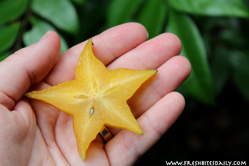 Star Fruit, Sliced from FreshBitesDaily.com