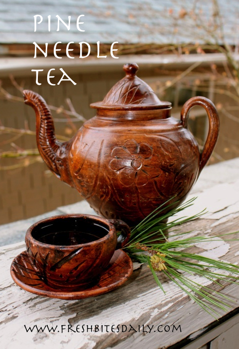 "Pine needle tea and other recipes from our adventures on ""The Lost Road"""