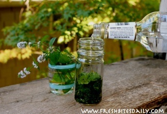 Homemade peppermint extract: You're making it all wrong!
