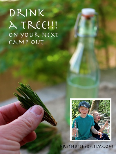 """""""Drink a tree"""" on your next camping trip, recommend the Half Pints"""