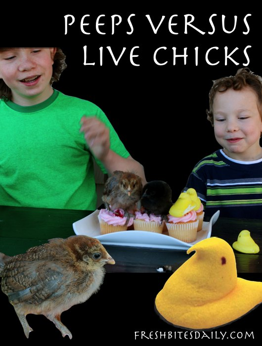 What looks better on a cupcake: A Peep or a live chick? Plus a Peeps tasting review.